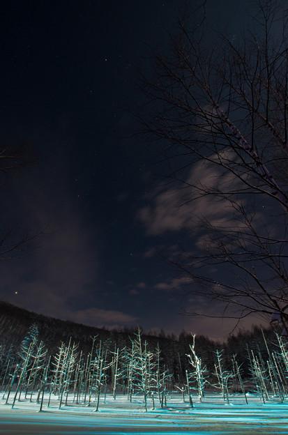 美瑛 青い池ライトアップ