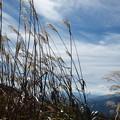写真: 冬近し