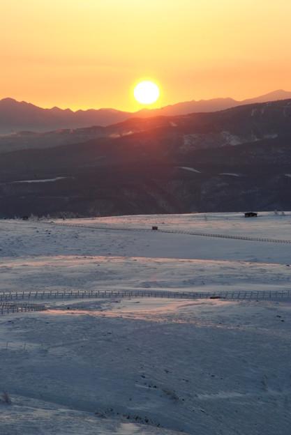 写真: 雪原の夜明け