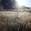 写真: 奥日光にも霜がーーー