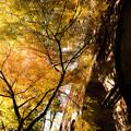 Photos: 秋の水路閣を見上げて