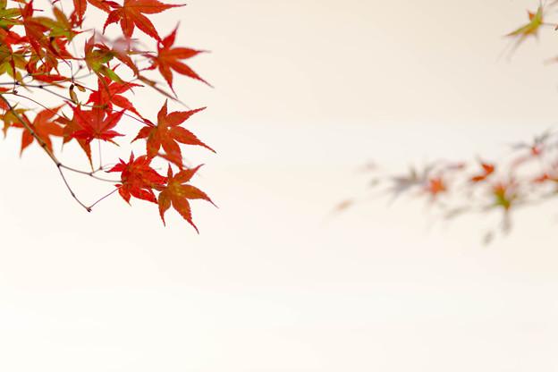 mezzo piano in autumn