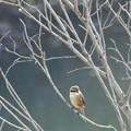 写真: 冬木立~♪