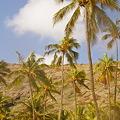 写真: ハナウマベイ・ビーチ