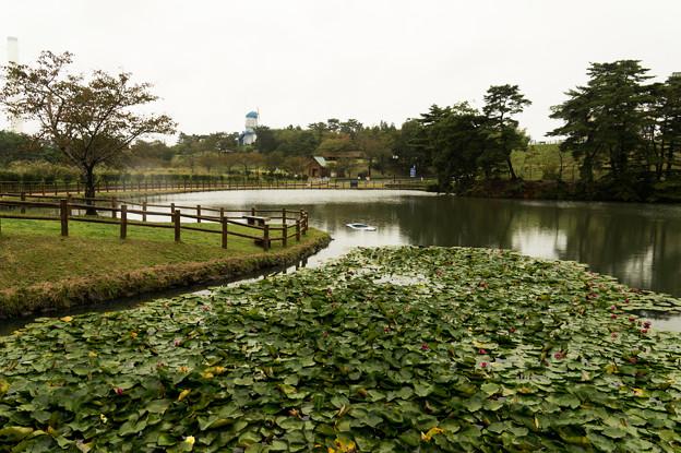 広野総合公園初秋-11