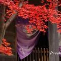 平林寺のモミジ