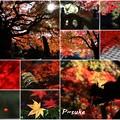 秋の総集編