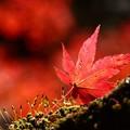 写真: The RED