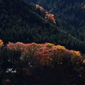 写真: 色付く山
