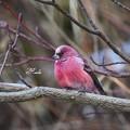 写真: 赤い鳥