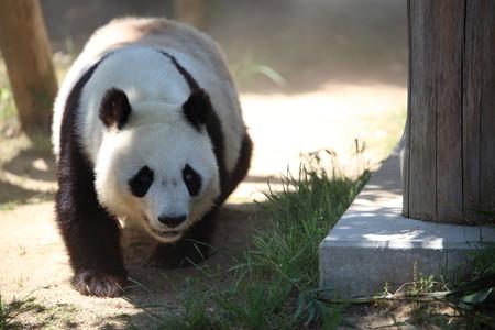 神戸市王子動物園19