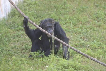 神戸市王子動物園118