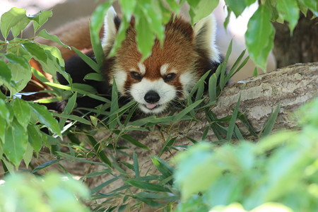 神戸市王子動物園98