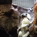 上野動物園79