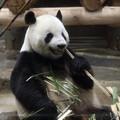 Photos: 上野動物園94