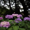 上野公園6