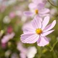 Photos: 小さな花畑
