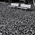 写真: 公園 ベンチ