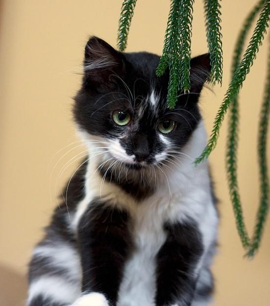 kitten1023_06