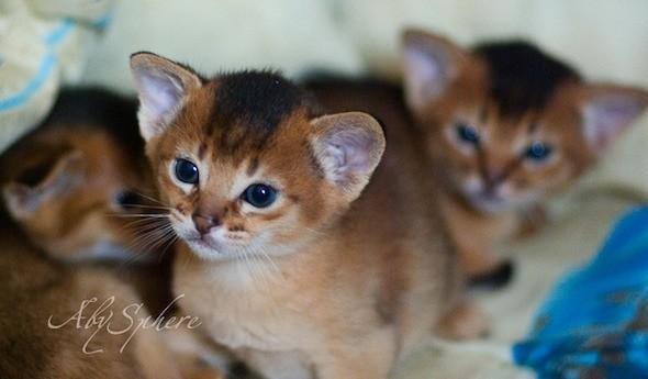 kitten1026_04