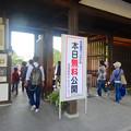 写真: 秋の名古屋城 - 02:「名古屋まつり」に伴う無料公開で賑わう名古屋城