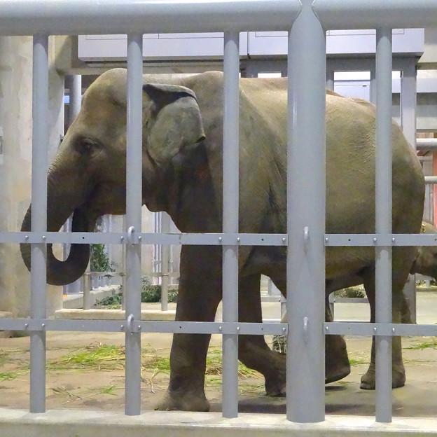 ゾウ舎の中で食事中だったアジアゾウの親子 - 3