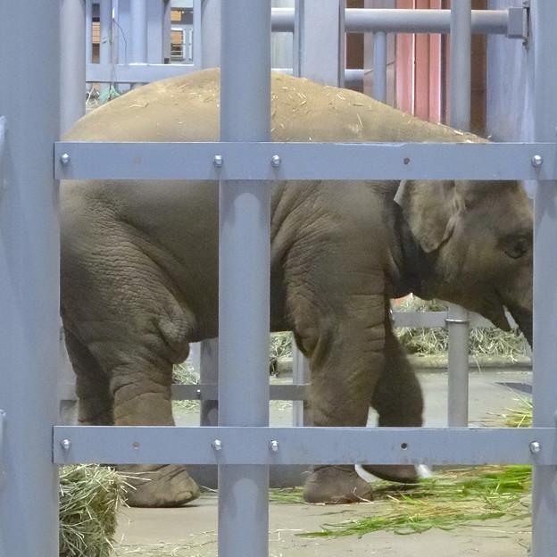 ゾウ舎の中で食事中だったアジアゾウの親子 - 4