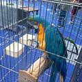 オアシス21:ふれあい動物園(カメラを向けるとポーズを取る(?)インコ)