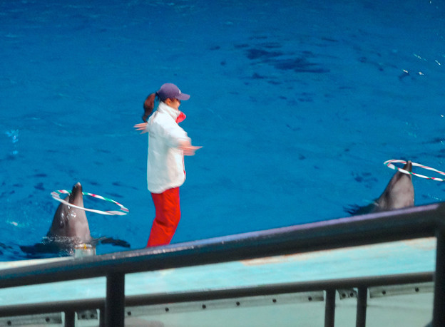 名古屋港水族館:クリスマス・イブに行われた夜のイルカショー 2014 No - 31