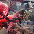 Photos: わんにゃんドーム 2015 No - 054:枝の上でじっとしているトカゲ