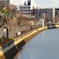写真: 堀川沿いの道(住吉橋近く)