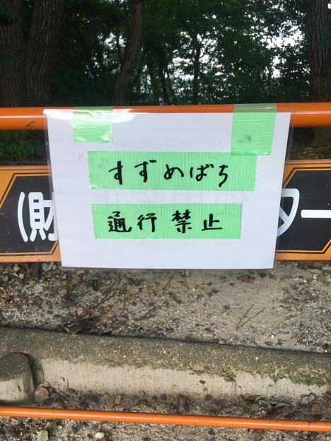 桃花台中央公園:スズメバチが出たため、一部を封鎖(2017年9月) - 2