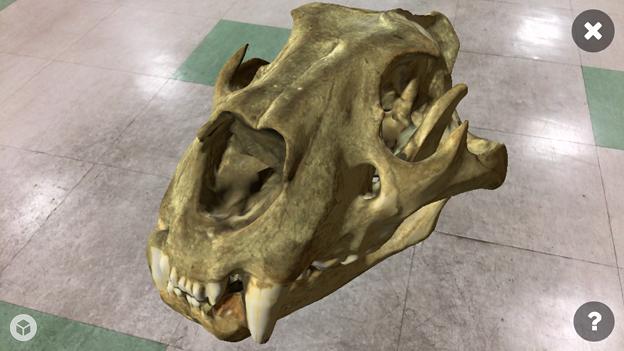 3Dモデル共有サービス「Sketchfab」公式アプリ - 84:3DモデルをAR!(ライオンの頭蓋骨)