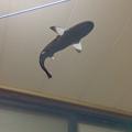 空中を泳ぐサメをペットとして飼える「shARk」 - 4