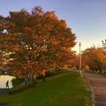 写真: すっかり秋の装いとなっていた落合公園の木々 - 3