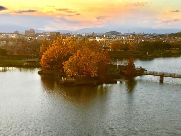落合公園 水の塔から見下ろした、夕暮れ時の紅葉した木々 - 1