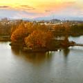 写真: 落合公園 水の塔から見下ろした、夕暮れ時の紅葉した木々 - 1