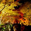 東山動植物園の紅葉ライトアップ 2017 No - 31