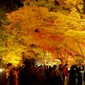 東山動植物園の紅葉ライトアップ 2017 No - 32