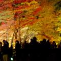 東山動植物園の紅葉ライトアップ 2017 No - 34