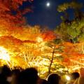 東山動植物園の紅葉ライトアップ 2017 No - 40:月と紅葉
