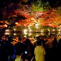 東山動植物園の紅葉ライトアップ 2017 No - 42