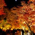 東山動植物園の紅葉ライトアップ 2017 No - 43:月と紅葉