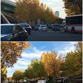 若宮大通公園の紅葉した並木 - 7