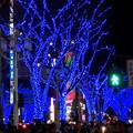 今年(2017年)も始まった、大津通の街路樹のクリスマス・イルミネーション - 2