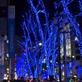 今年(2017年)も始まった、大津通の街路樹のクリスマス・イルミネーション - 3