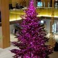 JPタワー名古屋のクリスマスツリー 2017 No - 8