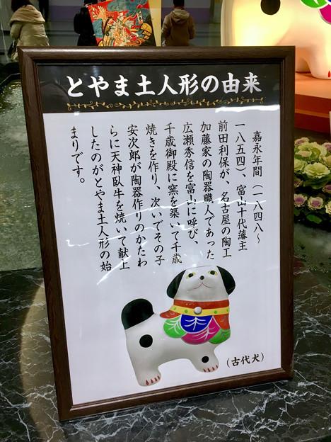 クリスタル広場:戌年にちなんだ犬の置き物は「古代犬」!? - 6
