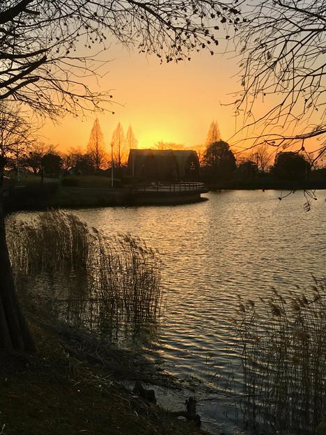 落合公園:落合池の夕焼け - 2