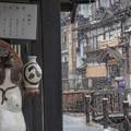 Photos: 雪見酒でもイカガッスカ~